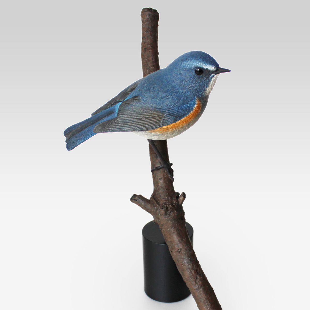 ルリビタキ Red-flanked Bluetail Tarsiger cyanurus