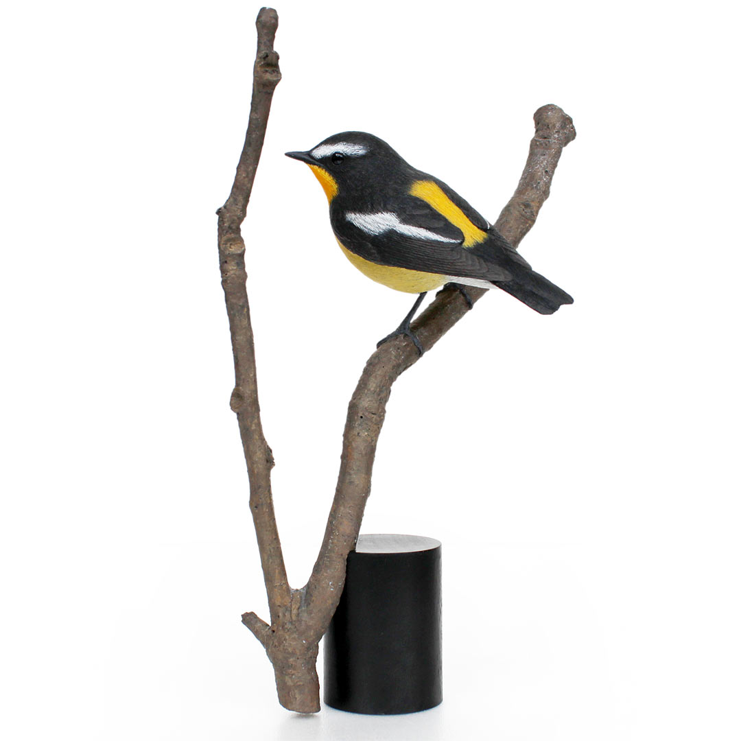 マミジロキビタキ Yellow-rumped Flycatcher Ficedula zanthopygia